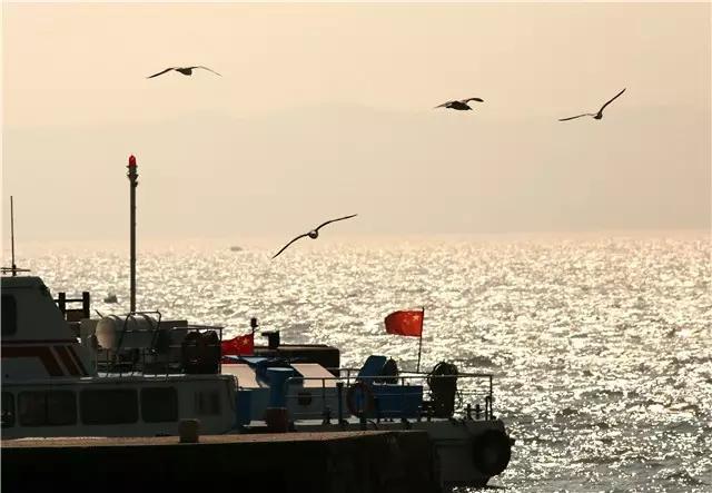 刘公岛上海鸥飞